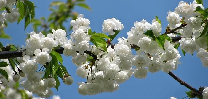 seizoensgroenten lente